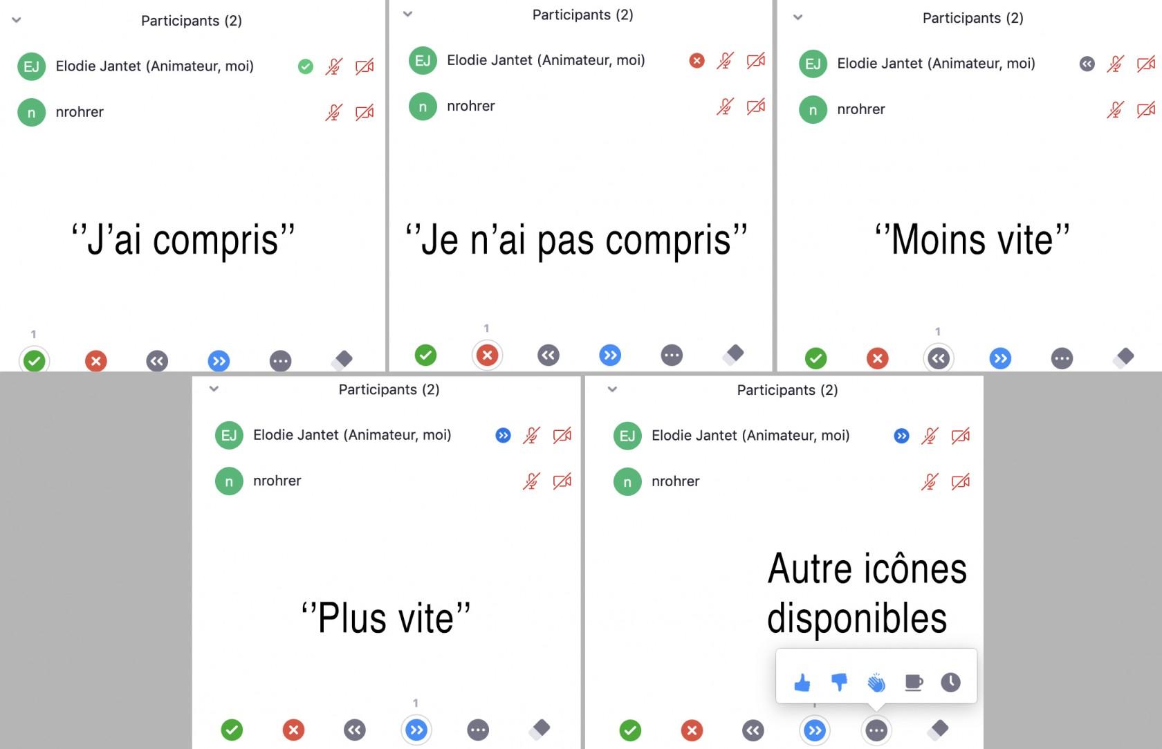 icones-chat.jpg